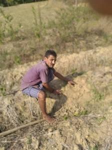 ginger crop
